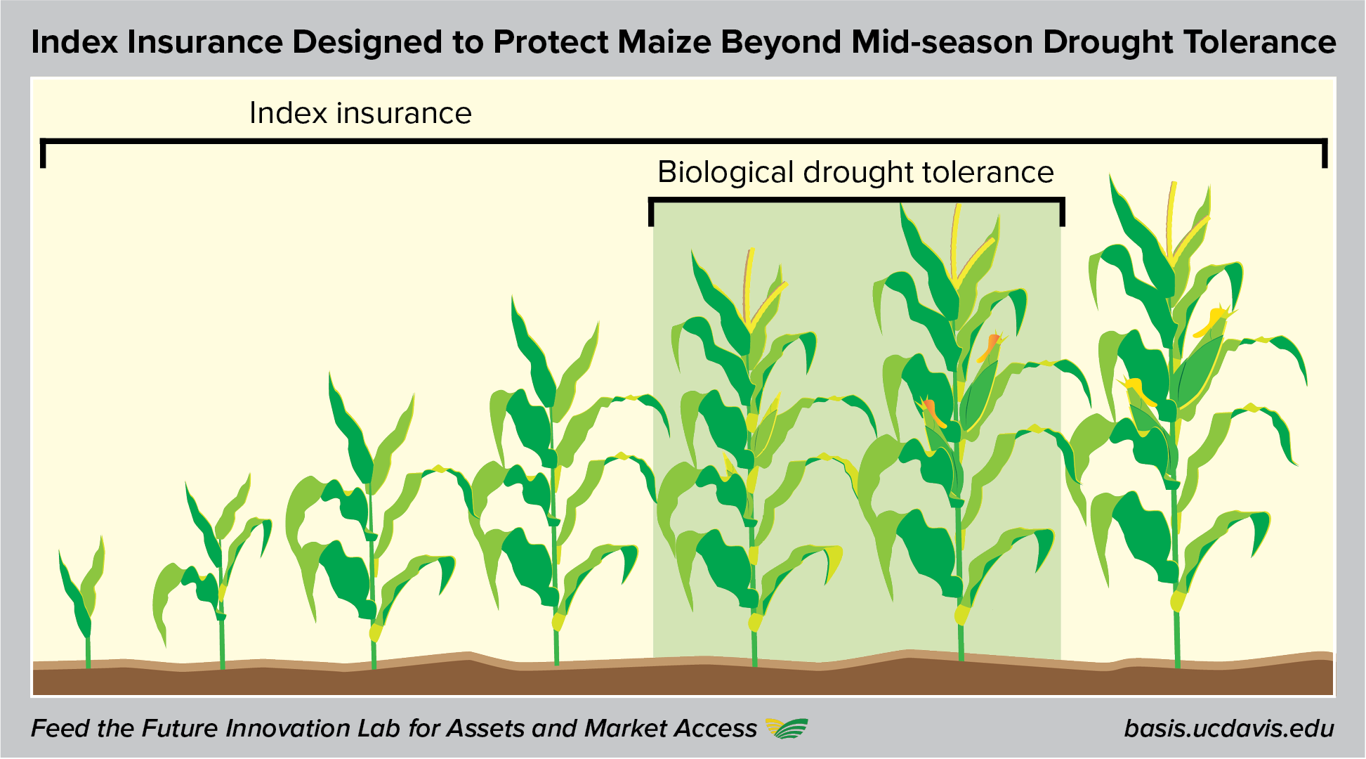 Drought tolerant maize and index insurance illustration