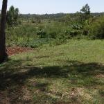 Field in Kenya