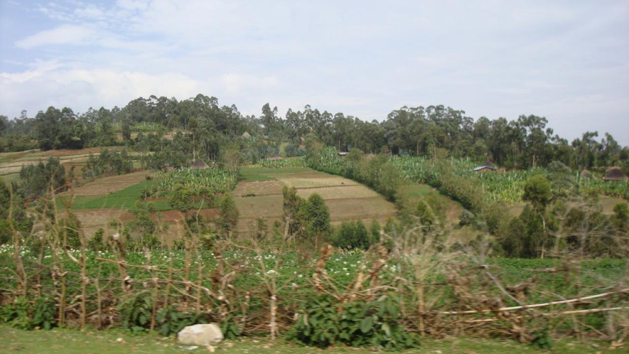 Hilly Bangladeshi farms