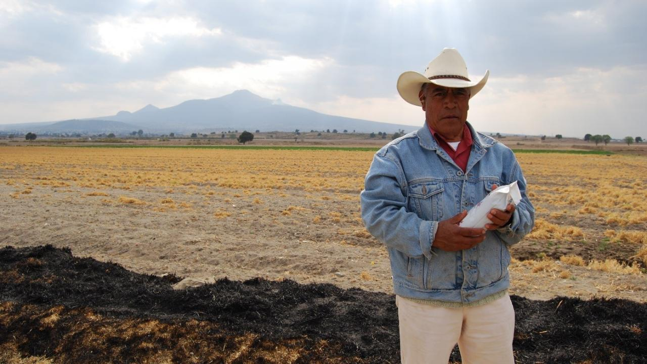 Maize farmer in Mexico