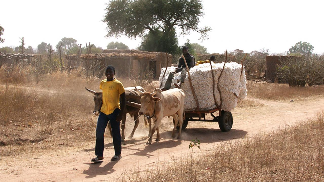 Burkina Faso cotton farmers