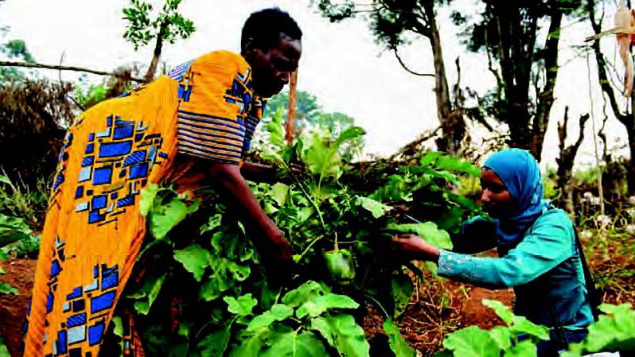 women farmers in Uganda