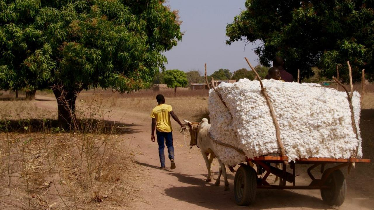cotton cart