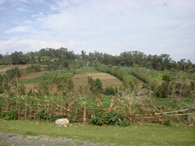 farm in Ethiopia